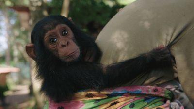 S1E8 - Lwiro Primates: Sanctuary