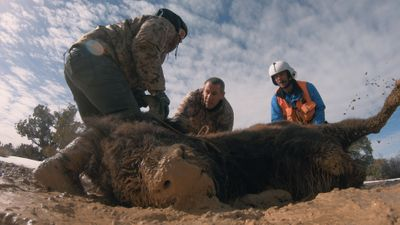 S1E5 - Bison, Not Buffalo