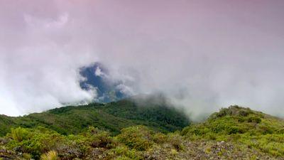 Caribbean Rainforest