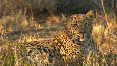 Namibia - The Original Adventure