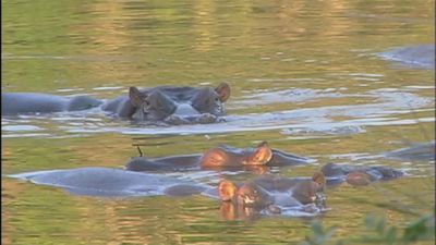 South Africa: On Safari!